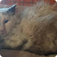 Adopt A Pet :: Eowyn - Ennis, TX