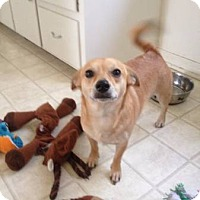 Adopt A Pet :: Jean Paul - Lomita, CA