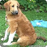 Adopt A Pet :: Brook in NY - pup! - Beacon, NY