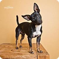 Adopt A Pet :: Paco - Pearland, TX