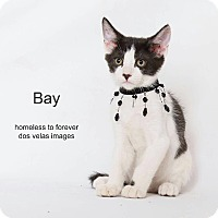 Adopt A Pet :: Bay - Arcadia, CA
