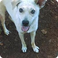 Adopt A Pet :: Shadow - North Brunswick, NJ