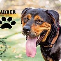 Adopt A Pet :: Garber - Kansas City, MO