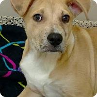 Adopt A Pet :: Quinn - Aiken, SC