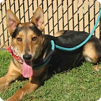 Adopt A Pet :: PUPPY - Norco, CA