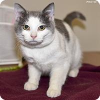 Adopt A Pet :: Jasper - Medina, OH