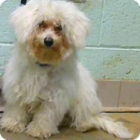Adopt A Pet :: Maggie (reclaim) - Decatur, GA
