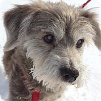 Adopt A Pet :: Russell:tail WAGS! (VA) - Madison, WI