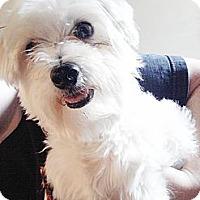 Adopt A Pet :: Charlie - Puyallup, WA