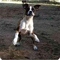 Adopt A Pet :: Ollie - Thomasville, GA