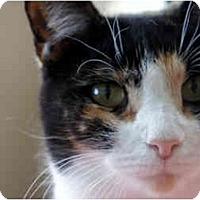 Adopt A Pet :: Zelda - Xenia, OH