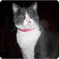 Adopt A Pet :: Mama Leone - Hamburg, NY