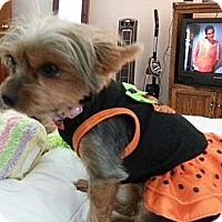 Adopt A Pet :: Katie - Bellingham, WA
