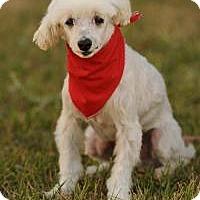 Adopt A Pet :: Bertie - Rancho Palos Verdes, CA