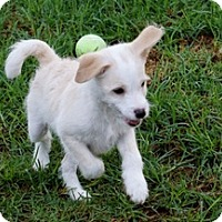 Adopt A Pet :: Milo - La Habra Heights, CA