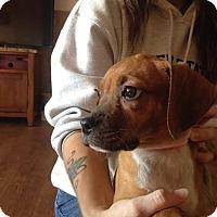 Adopt A Pet :: Lilly - Carey, OH