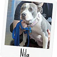 Adopt A Pet :: Nila - McCalla, AL