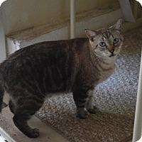 Adopt A Pet :: MacBeth - Seminole, FL