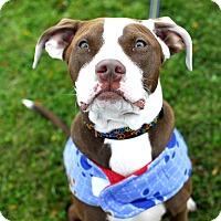 Adopt A Pet :: Jesse-Adopted! - Detroit, MI