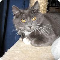 Adopt A Pet :: taffeta - brewerton, NY