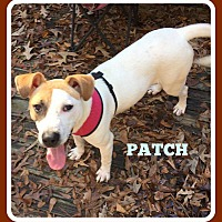 Terrier (Unknown Type, Medium)/Labrador Retriever Mix Dog for adoption in Malvern, Arkansas - PATCH