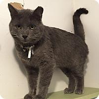 Adopt A Pet :: Altus - Colorado Springs, CO