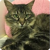 Adopt A Pet :: Lulu - Novato, CA