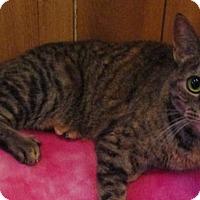 Adopt A Pet :: Samantha - Witter, AR