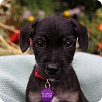 Adopt A Pet :: THOMAS - Newport Beach, CA