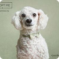Adopt A Pet :: Felix - Chandler, AZ