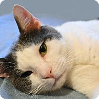 Adopt A Pet :: Spot (in CT) - Manchester, CT