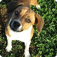 Adopt A Pet :: Meggie - Liberty Center, OH
