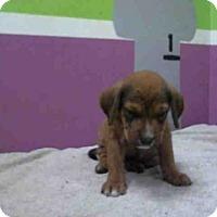 Adopt A Pet :: JUSTIN - Houston, TX