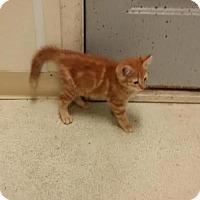Adopt A Pet :: Fanta - Maquoketa, IA