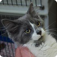 Adopt A Pet :: Fuji (PETCO) - Nashville, IN