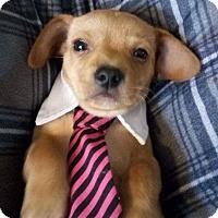 Adopt A Pet :: Olaf - Columbus, OH
