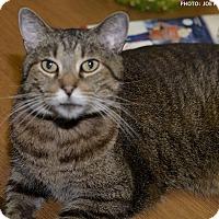 Adopt A Pet :: Paulie - Medina, OH