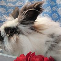 Adopt A Pet :: Rabunzel - Newport, DE
