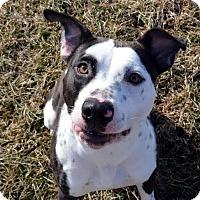 Adopt A Pet :: Jay - Lacon, IL