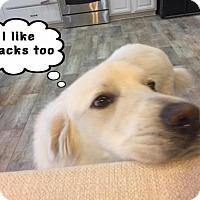Adopt A Pet :: Thor - Garland, TX
