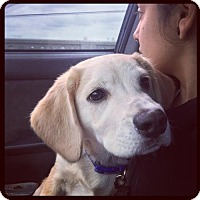 Adopt A Pet :: Conner - Los Angeles, CA