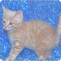 Adopt A Pet :: Huggy Bear - Colmar, PA