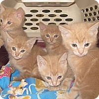 Adopt A Pet :: Cashew - Dallas, TX