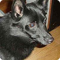 Adopt A Pet :: PETRA - Leesport, PA