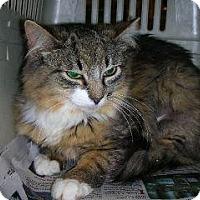Adopt A Pet :: Bambi - Pittstown, NJ
