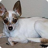 Adopt A Pet :: SUZY - AUSTIN, TX