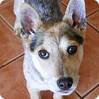 Adopt A Pet :: Quincy - dewey, AZ