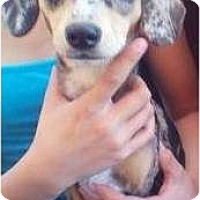 Adopt A Pet :: Daisy and Delilah - Lucerne Valley, CA
