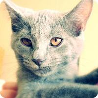 Adopt A Pet :: Dusk - Green Bay, WI