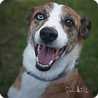 Adopt A Pet :: Peter - Farmington Hills, MI